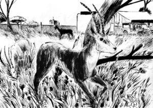 Dessin de deux antilopes dans un parc fait à l'encre et au lavis.