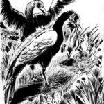 Dessin à l'encre de chine de deux grands oiseaux qui donnent à manger à leurs oisillons.