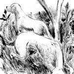 Dessin de deux chiens de chasse dans les herbes hautes, fait à l'encre et au lavis.